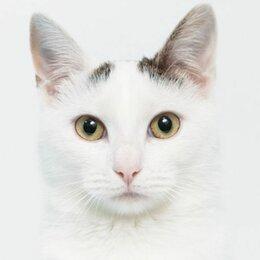 Кошки - Флеш. Супергеройская кошка в добрые руки, 0