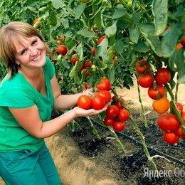 Рабочие - Рабочий на уборку овощей вахта, 0