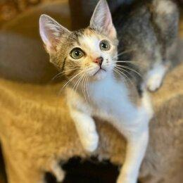 Кошки - Ласковая девочка трёхцветочка Луиза ищет дом, 0
