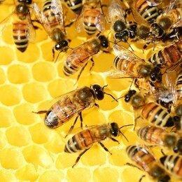 Сельскохозяйственные животные и птицы - Пчелопакеты карника с доставкой, 0