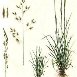 Субстраты, грунты, мульча - Овсяница тростниковая Сорта: кора, 0