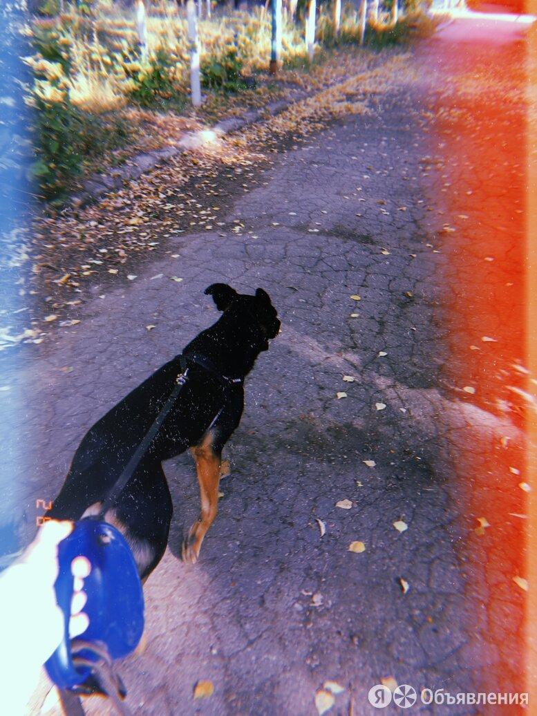 Выгул собак  по цене 150₽ - Услуги для животных, фото 0