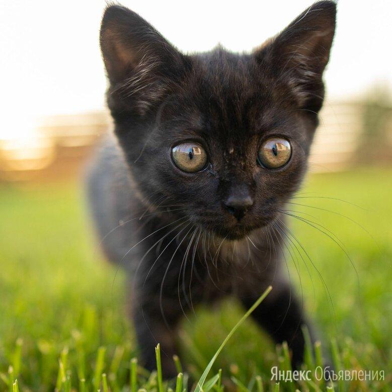 Котёнок по цене даром - Кошки, фото 0