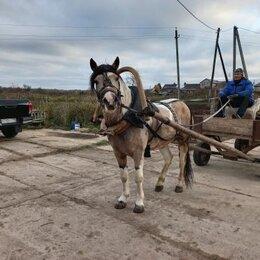 Услуги для животных - Заездка лошадей в упряжь, 0