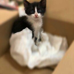 Животные - Чёрно-белые котята девочки, 0