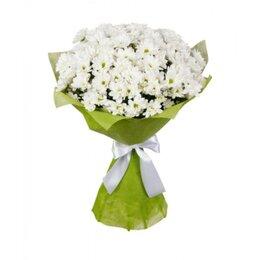 Цветы, букеты, композиции - Букет из белых кустовых хризантем (7шт), 0