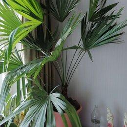 Комнатные растения - Комнатная пальма, 0
