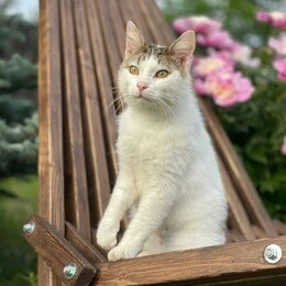 Кошки - Кот Степа, 0