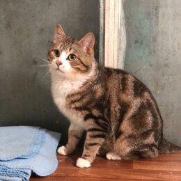 Кошки - Продав квартиру, предали-бросили кота..., 0