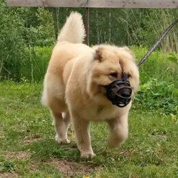 Собаки - БОШ - серьезная собака для охраны в дар, 0