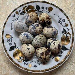 Продукты - Перепелиные яйца, 0