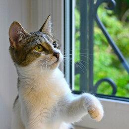 Кошки - Несчастная девочка Нюшенька ищет свой дом, 0