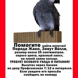 Животные - Пропал Попугай Жако!!! Москва район м. Академическая, 0