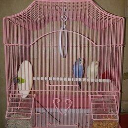 Птицы - Продам попугаев с клеткой волнистые, четыре тысячи, привезу вам сама)) , 0