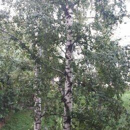 Бытовые услуги -     Снос,обрезка аварийных деревьев, 0