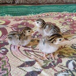 Птицы - Цесарята, 0
