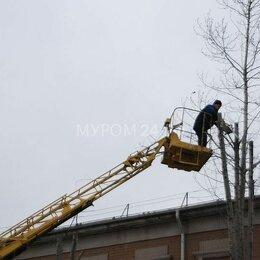 Бытовые услуги - Кронирование деревьев, 0