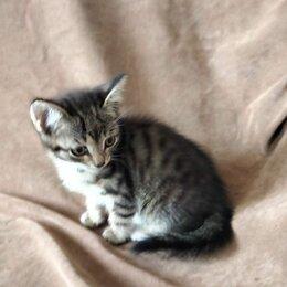 Кошки - Очаровательные котята , мальчики ., 0