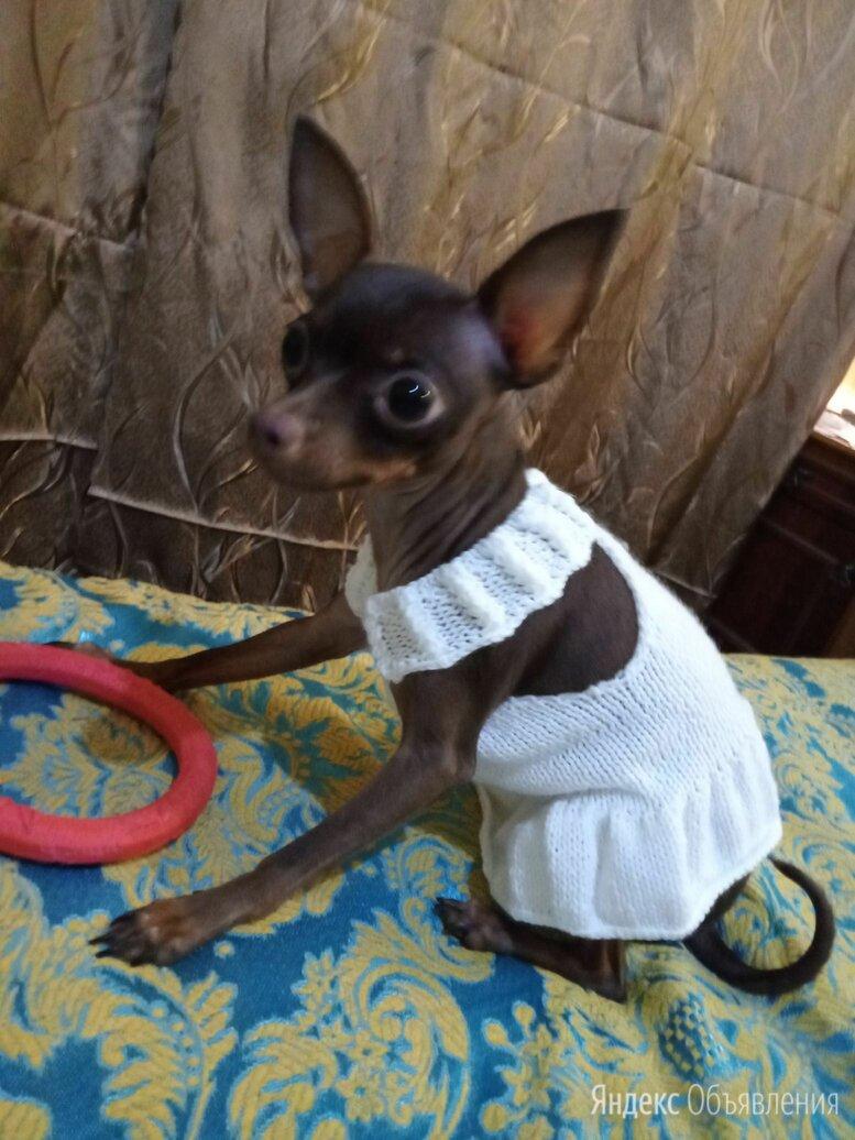 Летнее платье для собачки по цене 400₽ - Одежда и обувь, фото 0