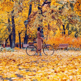 Пиломатериалы - Прогулка среди золотых листьев Артикул : GX 25401, 0
