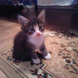 Кошки - Отдаю котят в добрые руки, 0