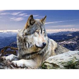 Картины, постеры, гобелены, панно - Волк в горах Артикул : GF 3681, 0