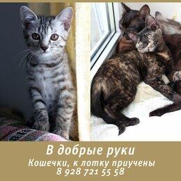 Кошки - котята в дар, 0