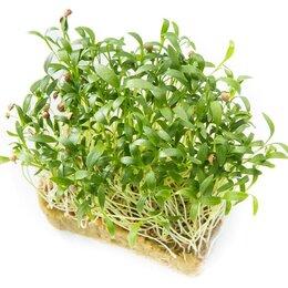 Семена - Кориандр (Кинза) для проращивания микрозелени и зелени, 100г, 0