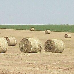 Сено и наполнители - Сено сеяных трав в рулонах, 0