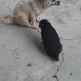 Собаки - Отдам в добрые руки на КМВ, 0