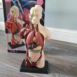 Наборы для исследований - Анатомический набор (тело, органы 27см), 0