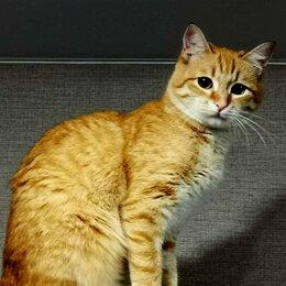 Кошки - Рыжая кошка, 0