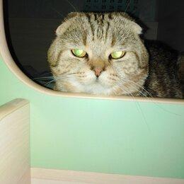 Услуги для животных - Вязка. Шотландский кот. 2 года. , 0