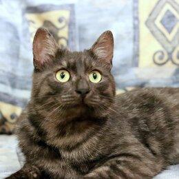 Кошки - Мраморный кот в дар , 0