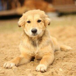 Собаки - Любознательный щенок, 0