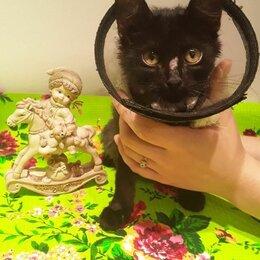 Кошки - Кошечка, 0