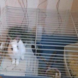 Кролики - Домашние животные, 0