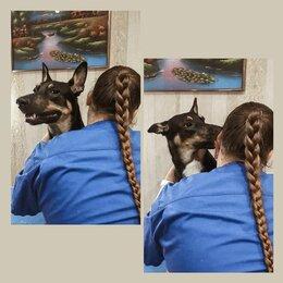 Услуги для животных - Стрижка собак,груминг, 0