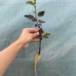 Рассада, саженцы, кустарники, деревья - Черенки декоративных растений на ОСЕНЬ 2021, 0