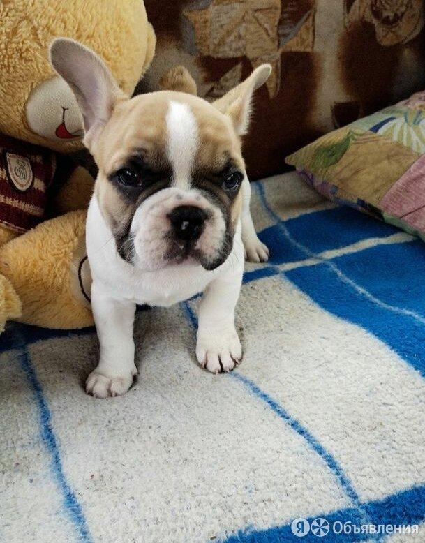 Щенок по цене 33000₽ - Собаки, фото 0