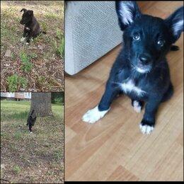 Собаки - Малышка в добрые руки, 3 месяца, 0