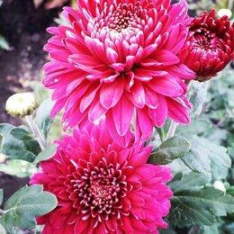 Помощницы по хозяйству - Помощница по саду с цветам, 0