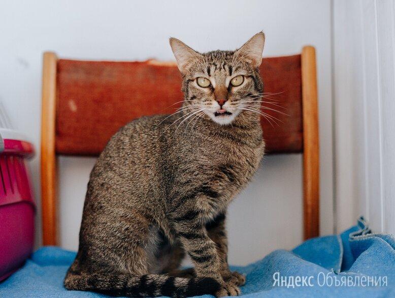 Роскошная кошка Марвина в добрые руки.  по цене даром - Кошки, фото 0
