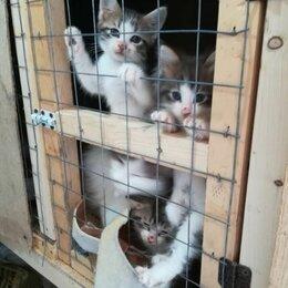 Кошки - Спасите малышей , 0