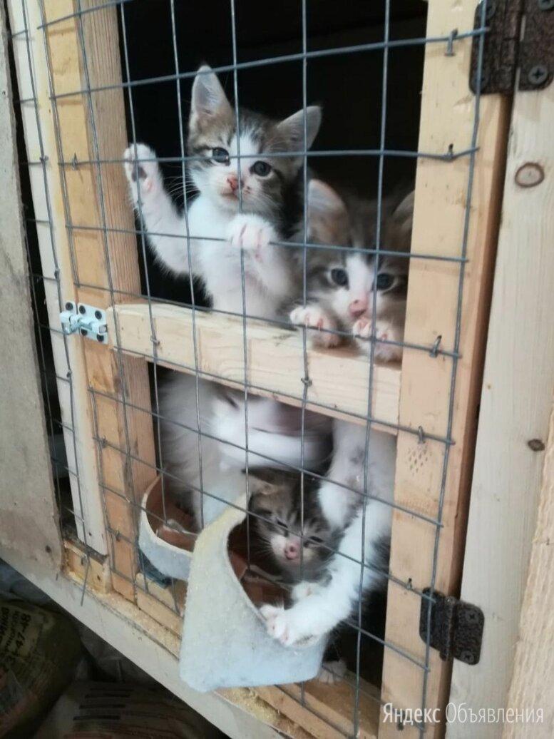 Спасите малышей  по цене даром - Кошки, фото 0