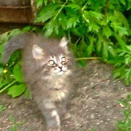Кошки - Два пушистых котенка от дворовой кошки хотят найти свою любимую хозяйку , 0