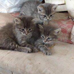 Кошки - Отдам котят в добрые руки, 0