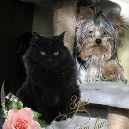 Услуги для животных - Гостиница-Передержка для кошек и маленьких собак до 5 кг, 0