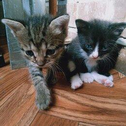 Кошки - Очаровательные котята ищут дом, 0