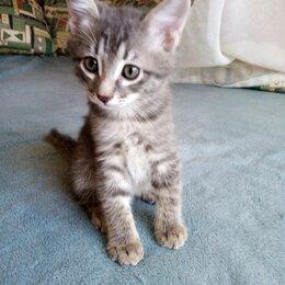 Кошки - Летние котята ищут дом, 0